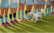 28 April 2018; Ralf Duke, dog of the team captain Deirdre Duke, on the pitch during the celebrations after the Women's EY Hockey League match between UCD and Monkstown at UCD in Belfield, Dublin. Photo by Piaras Ó Mídheach/Sportsfile