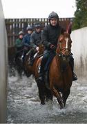 19 February 2019; Samcro, with Shane McCann up, walk through a stream during a Gordon Elliott yard visit at Gordon Elliott Racing in Longwood, Co Meath. Photo by Harry Murphy/Sportsfile