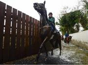 19 February 2019; Surin, with Davy Contan up, leave the stream during a Gordon Elliott yard visit at Gordon Elliott Racing in Longwood, Co Meath. Photo by Harry Murphy/Sportsfile