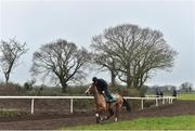 20 February 2019; Faugheen, with John Codd up, during a visit to Willie Mullins' yard at Willie Mullins Racing in Bagenalstown, Carlow. Photo by Matt Browne/Sportsfile