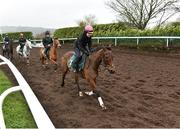 20 February 2019; Un De Sceaux, with Virginie Bascop up, during a visit to Willie Mullins' yard at Willie Mullins Racing in Bagenalstown, Carlow. Photo by Matt Browne/Sportsfile