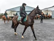 20 February 2019; Klassical Dream, with Eilish Byrne up, during a visit to Willie Mullins' yard at Willie Mullins Racing in Bagenalstown, Carlow. Photo by Matt Browne/Sportsfile