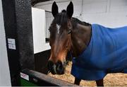 20 February 2019; Douvan during a visit to Willie Mullins' yard at Willie Mullins Racing in Bagenalstown, Carlow. Photo by Matt Browne/Sportsfile