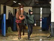 20 February 2019; Melon, with David Casey up, during a visit to Willie Mullins' yard at Willie Mullins Racing in Bagenalstown, Carlow. Photo by Matt Browne/Sportsfile