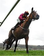 15 March 2019; Rachael Blackmore crosses the finish line on Minella Indo to win the Albert Bartlett Novices' Hurdle on Day Four of the Cheltenham Racing Festival at Prestbury Park in Cheltenham, England. Photo by David Fitzgerald/Sportsfile