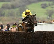 15 March 2019; Al Boum Photo, with Paul Townend up, jumps the last on their way to winning the Magners Cheltenham Gold Cup Chase on Day Four of the Cheltenham Racing Festival at Prestbury Park in Cheltenham, England. Photo by Seb Daly/Sportsfile