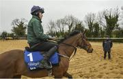 19 March 2019; Trainer Gordon Elliott and Tiger Roll at the launch of the 2019 Boylesports Irish Grand National at Gordon Elliott's yard in Longwood, Co. Meath. Photo by Ramsey Cardy/Sportsfile