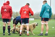15 April 2019; Dogs get involved in the warm-up during Munster Rugby Squad Training at University of Limerick in Limerick. Photo by Brendan Moran/Sportsfile