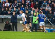 18 May 2019; A dog on the pitch during the Ulster GAA Football Senior Championship quarter-final match between Cavan and Monaghan at Kingspan Breffni in Cavan. Photo by Daire Brennan/Sportsfile
