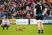 18 May 2019; Karl O'Connell and Rory Beggan of Monaghan watches as a dog runs across the pitch during the Ulster GAA Football Senior Championship quarter-final match between Cavan and Monaghan at Kingspan Breffni in Cavan. Photo by Oliver McVeigh/Sportsfile