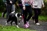 12 October 2019; A dog pictured at the Monaghan Town parkrun, Rossmore Forest Park, Gortnakeegan, Monaghan, where Vhi hosted a special event to celebrate their partnership with parkrun Ireland. Vhi ambassador and Olympian David Gillick was on hand to lead the warm up for parkrun participants before completing the 5km free event. Parkrunners enjoyed refreshments post event at the Vhi Rehydrate, Relax, Refuel and Reward areas. parkrun in partnership with Vhi support local communities in organising free, weekly, timed 5k runs every Saturday at 9.30am. To register for a parkrun near you visit www.parkrun.ie. Photo by Piaras Ó Mídheach/Sportsfile