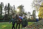 14 November 2019; Douvan in the parade ring before the Clonmel Oil Steeplechase at Clonmel Racecourse in Tipperary. Photo by Matt Browne/Sportsfile