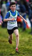 15 December 2019; Fionn Higgins of Craughwell A.C., Co. Galway, competing in the U13 Boy's 3500m during the Irish Life Health Novice & Juvenile Uneven XC at Cow Park in Dunboyne, Co. Meath. Photo by Harry Murphy/Sportsfile