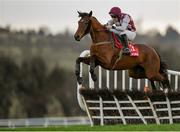 15 January 2020; Toushan, with Phillip Enright up, jumps the first during the Ladbrokes Daily Odds Boosts Handicap Hurdle at Punchestown Racecourse in Kildare. Photo by Harry Murphy/Sportsfile