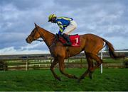 15 January 2020; Game Bird, with John Berry up, during the Irish Stallion Farms EBF Mares Flat Race at Punchestown Racecourse in Kildare. Photo by Harry Murphy/Sportsfile