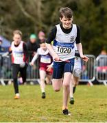 8 February 2020; Dylan Ryan of Donboyne AC, Meath, leads his team home to win the under-14 boys relay during the Irish Life Health National Intermediate, Master, Juvenile B & Relays Cross Country at Avondale in Rathdrum, Co Wicklow. Photo by Matt Browne/Sportsfile