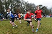 8 February 2020; Finn Duignan of St Cronans AC, Clare, left, takes the baton from team-mate Tadhg Bane during the boys under-12 relay at the Irish Life Health National Intermediate, Master, Juvenile B & Relays Cross Country at Avondale in Rathdrum, Co Wicklow. Photo by Matt Browne/Sportsfile