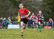 8 February 2020; Finn Duignan of St Cronans AC, Clare, leads his team home to win the boys under-12 relay at the Irish Life Health National Intermediate, Master, Juvenile B & Relays Cross Country at Avondale in Rathdrum, Co Wicklow. Photo by Matt Browne/Sportsfile
