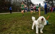 7 March 2020; Runners go past Harvey the Bichon Frise in the Senior Boys race during the Irish Life Health All-Ireland Schools Cross Country Championships at Santry Demesne in Santry, Dublin. Photo by David Fitzgerald/Sportsfile