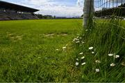 10 May 2020; A general view of daisies growing in the goals at Avantcard Páirc Seán MacDiarmada on the afternoon of the Connacht GAA Football Senior Championship Quarter-Final match between Leitrim and Mayo at Avantcard Páirc Seán MacDiarmada in Carrick-on-Shannon, Leitrim. This weekend, May 9 and 10, was due to be the first weekend of games in Ireland of the GAA All-Ireland Senior Championship, beginning with provincial matches, which have been postponed following directives from the Irish Government and the Department of Health in an effort to contain the spread of the Coronavirus (COVID-19). The GAA have stated that no inter-county games will take place before October 2020. Photo by Piaras Ó Mídheach/Sportsfile