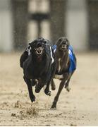 18 June 2020; Barstool Lad, left, during The Barking Buzz App Five-2-Five Stakes at Enniscorthy Greyhound Stadium in Wexford. Greyhound racing across the Republic of Ireland returned, on 18 June, as restrictions on sporting events are relaxed during the Coronavirus (COVID-19) pandemic. Photo by Stephen McCarthy/Sportsfile