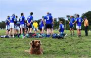 30 June 2020; St Sylvester's supporter Mollie the dog looks on as St Sylvester's players speak at half-time of the Junior B Hurling Challenge game between St Sylvester's and St Patrick's Donabate at Malahide Castle Pitches in Dublin. Photo by Piaras Ó Mídheach/Sportsfile
