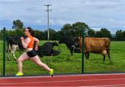 25 July 2020; Cows look on from a nearby field as Margaret Mary Grace of Nenagh Olympic AC, Tipperary, competes in the Senior Ladies 400m event during the Summer Games Athletics Meet at Moyne AC in Tipperary. Photo by Piaras Ó Mídheach/Sportsfile