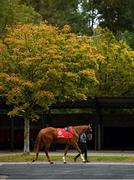16 September 2020; One Smart Cookie in the pre-parade ring prior to the CorkRacecourse.ie Nursery Handicap at Cork Racecourse in Mallow. Photo by Seb Daly/Sportsfile