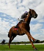 16 September 2020; McCabe, with Kevin Manning up, on their way to winning the Mitchelstown Handicap at Cork Racecourse in Mallow. Photo by Seb Daly/Sportsfile