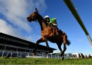 29 December 2020; Midnight Maestro, with Tom Kelly up, on their way to winning the Adare Manor Opportunity Handicap Steeplechase on day four of the Leopardstown Christmas Festival at Leopardstown Racecourse in Dublin. Photo by Seb Daly/Sportsfile