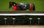 6 February 2021; Ashdale Bob parades to an empty Parade Ring ahead of the Nathaniel Lacy & Partners Solicitors `€50,000 Cheltenham Bonus For Stable Staff` Novice Hurdle on day 1 of the Dublin Racing Festival at Leopardstown Racecourse in Dublin. Photo by Harry Murphy/Sportsfile
