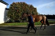 21 February 2021; Tiger Roll is led into the stables by stablehand Mary Nugent prior to racing at Navan Racecourse in Meath. Photo by David Fitzgerald/Sportsfile