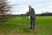 26 March 2021; To mark the launch of Phase 1 of the GAA Green Club Programme, the Easy Treesie – Crann Project (www.easytreesie.com) supported by Coillte (www.coillte.ie) and Trees on the Land (www.treesontheland.com) have agreed to provide GAA, Camogie and LGFA clubs with a generous allocation of native tree saplings, which due to current restrictions on access to Clubs will be distributed at the beginning of the next planting season in November. Coillte and Trees on the Land will donate and deliver approx. 50,000 native saplings to the project. To mark National Tree Week Uachtarán Cumann Luthchleas Gael, Larry McCarthy, planted a native oak, presented by Orla Farrell, Project lead of Easy Treesie. The planting took place on Fingal County Council land at Malahide Castle adjacent to the St Sylvester's GAA playing fields. Pictured is Uachtarán Chumann Lúthchleas Gael Larry McCarthy planting a native oak at Malahide Castle grounds in Dublin. Photo by Brendan Moran/Sportsfile