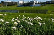 3 April 2021; Daisies growing on a patch of grass near the pitch before the SSE Airtricity Women's National League match between DLR Waves and Wexford Youths at UCD Bowl in Belfield, Dublin. Photo by Piaras Ó Mídheach/Sportsfile