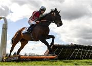 5 April 2021; Excelcius, with Danny Mullins up, jumps the last on their way to finishing nineteenth in the Farmhouse Foods Novice Handicap Hurdle during day three of the Fairyhouse Easter Festival at the Fairyhouse Racecourse in Ratoath, Meath. Photo by Harry Murphy/Sportsfile