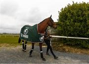 18 April 2021; Minella Times, winner of the Aintree Grand National, parades at Tramore Racecourse in Waterford. Photo by Harry Murphy/Sportsfile