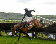 27 April 2021; Colreevy, with Danny Mullins up, jump the last on their way to winning the Dooley Insurance Champion Novice Steeplechase during day one of the Punchestown Festival at Punchestown Racecourse in Kildare. Photo by David Fitzgerald/Sportsfile