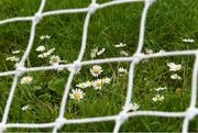12 June 2021; Daisies growing in a goalmouth before the Lidl Ladies National Football League Division 1 semi-final match between Dublin and Mayo at LIT Gaelic Grounds in Limerick. Photo by Piaras Ó Mídheach/Sportsfile