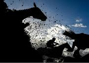 10 October 2021; Sapphire Lady, with Danny Mullins up, jumps the last during the second circuit of the JT McNamara Ladbrokes Munster National Handicap Steeplechase at Limerick Racecourse in Patrickswell, Limerick. Photo by Seb Daly/Sportsfile