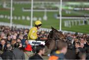 11 March 2014; Renard, with Aidan Coleman up, goes to post before the Baylis & Harding Affordable Luxury Handicap Chase. Cheltenham Racing Festival 2014. Prestbury Park, Cheltenham, England. Picture credit: Ramsey Cardy / SPORTSFILE - read more