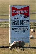 3 March 2001; The entrance to The Curragh Racecourse in Kildare, with a sign noting the next scheduled race meeting, as all sporting events in Ireland have been postponed as a precautionary measure against Foot and Mouth disease. Photo by Damien Eagers/Sportsfile