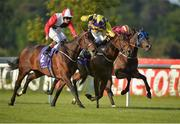 3 June 2016; Eventual winner Beechmount Whisper, left, with Gary Halpin up, races alongside eventual second place Primal Snow, centre, with Donnacha O'Brien up, and eventual third place Specific Gravity, with Declan McDonogh up, on their way to winning the Bulmers Live At Leopardstown Festival Maiden during the British Irish Chamber of Commerce Raceday in Leopardstown, Co. Dublin. Photo by Cody Glenn/Sportsfile