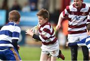 16 April 2017; Action between Tullow RFC and Athy RFC during the Bank of Ireland Minis at half time at the the Bank of Ireland Leinster Provincial Towns Cup Final match between Skerries RFC 2nd XV and Tullow RFC at the Showgrounds in Athy, Co. Kildare. Photo by Matt Browne/Sportsfile
