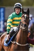 18 April 2017; Falcon Crest, with Jody McGarvey up, on their way to post prior to the Flynn Management And Contractors Supporting Ratoath GAA Race Day EBF Beginners Steeplechase during the Fairyhouse Easter Festival at Fairyhouse Racecourse in Ratoath, Co Meath. Photo by Cody Glenn/Sportsfile