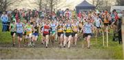 25 November 2012; A general view during the start of the Senior Mens 10,000m race with eventual winner Joe Sweeney, Dublin, 98. Woodie's DIY Juvenile and Inter County Cross Country Championships. Tattersalls, Ratoath, Co. Meath. Picture credit: Tomas Greally / SPORTSFILE